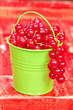 Red currants. Fresh harvested red currants in small bucket
