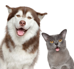 Happy pets on white background