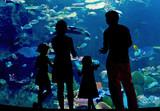 Fototapety Silhouettes of family in oceanarium looking at aquarium