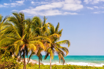 Three Palm Trees and Caribbean