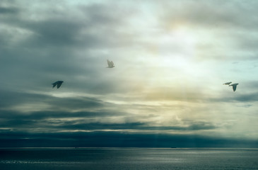 Calm After Storm. Birds Flying over Ocean with Storm Clouds. Wil