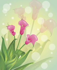Spring flowers on a pastel background.