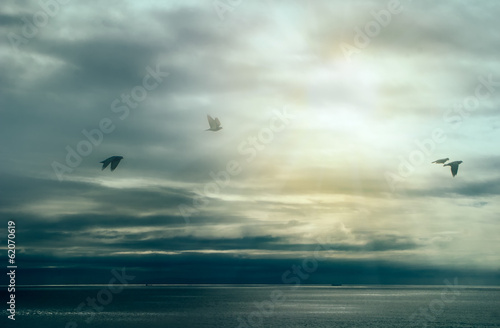 Calm After Storm. Birds Flying over Ocean with Storm Clouds. Wil © Casther