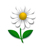 Vector daisy, design element