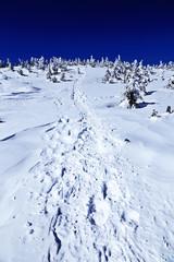 横手山の樹氷林