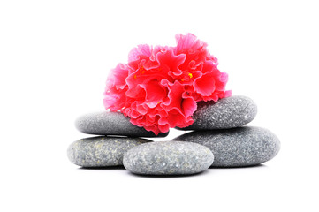 Zen And Spa Stone With Hibiscus Flower