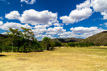 field with sky
