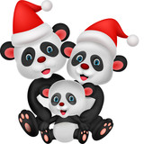 Cute panda bear family