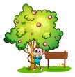 A cute monkey under the tree beside the empty wooden board
