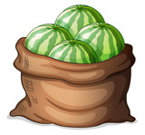 A sack of fresh watermelons