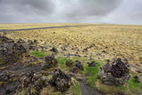 Icelandic moss covers volcanic rock