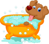 Dog bathing time