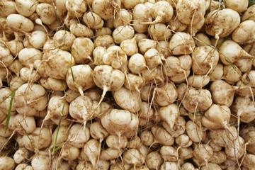 many jacama in market