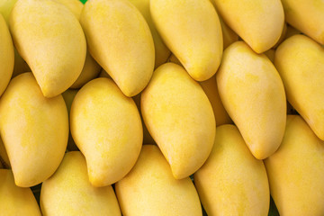 Closeup of Yellow Mango on market - exotic thai fruits