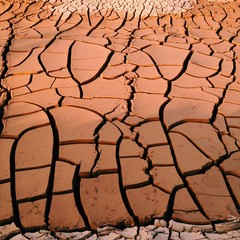 Dried Soil / Mud Cracks