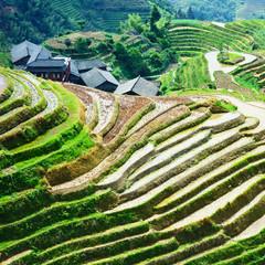 Rice Field in China - LongJi