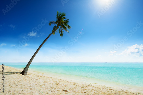 Palm tree at sandy beach in cabibbean paradise