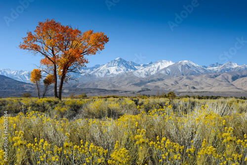 Tree in desert with mountains in background / USA / America