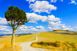 Tuscany, lonely tree and rural road. Siena, Orcia Valley, Italy.
