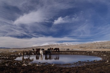 landscape with wild horses