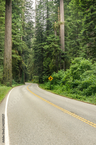 Winding Forest Road
