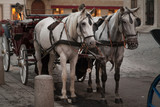 Traditional horse coach in Vienna, Austria