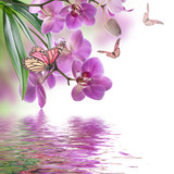 Floral background of tropical orchids and  butterfly