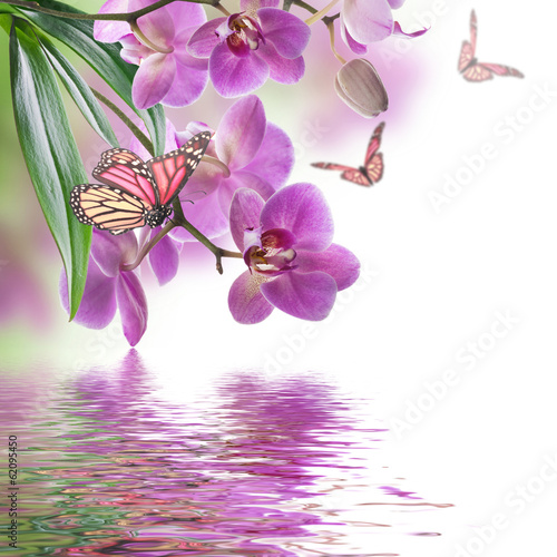 In de dag Orchidee Floral background of tropical orchids and butterfly
