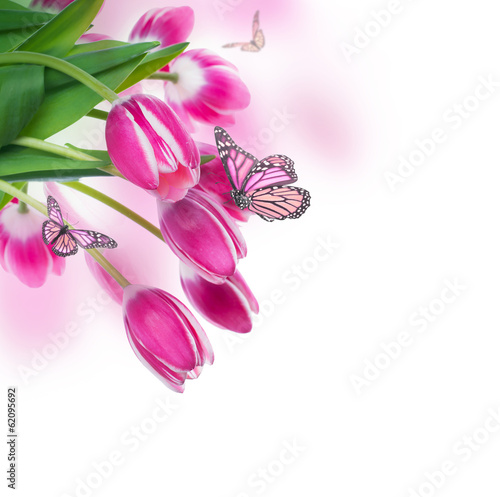 Red tulips with green grass  and  butterfly.