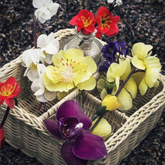 wicker basket with different flowers
