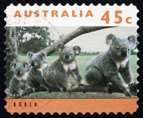Postage stamp Australia 1994 Koala, Phascolarctos Cinereus