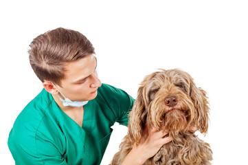 Veterinarian doctor