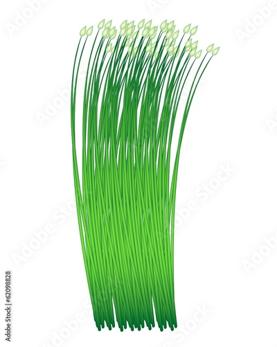 Fresh Garlic Chives on A White Background
