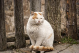 White rural tomcat by old wooden fence poster