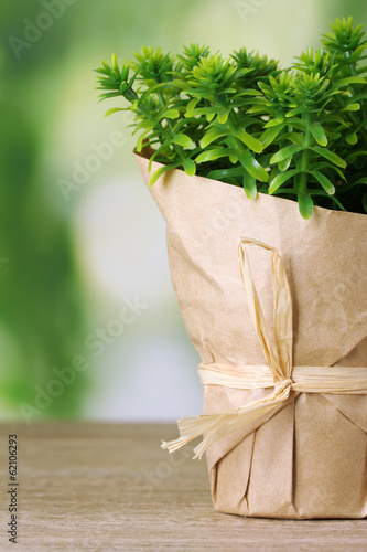 thyme herb plant in pot with beautiful paper decor
