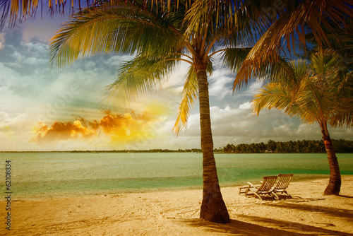 Beautiful marine landscape with tree on a pristine beach