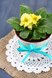 Yellow primrose in pot on napkin on wooden background