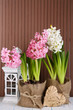 Hyacinth flowers in pots on table on wooden background