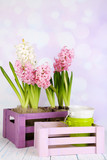 Hyacinth in crate on table on bright background