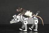 rat on zebra