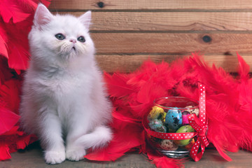 white kitten in red feathers