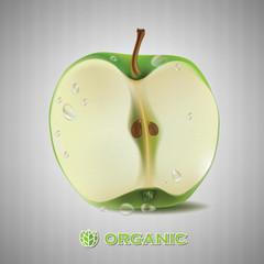 apple vector illustration.