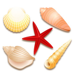 Seashells set and red starfish