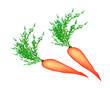 Two Delicious Fresh Carrot on White Background