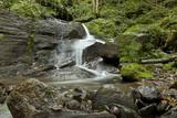 Bach fließt durch einen Wald