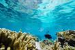 �瑚��熱帯魚