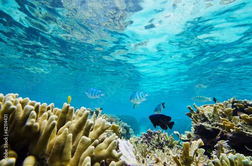 Tuinposter Koraalriffen 珊瑚礁と熱帯魚