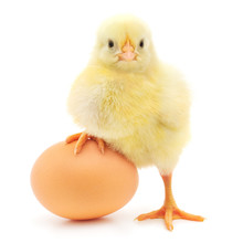 "Постер, картина, фотообои ""chicken and egg"""