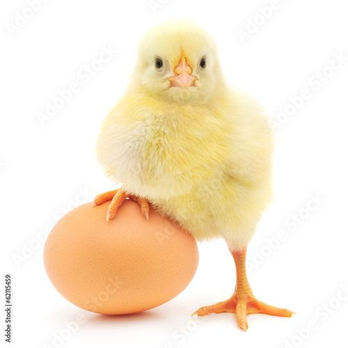 Deurstickers Vogel chicken and egg