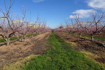 Fruitiers Champs Gallician